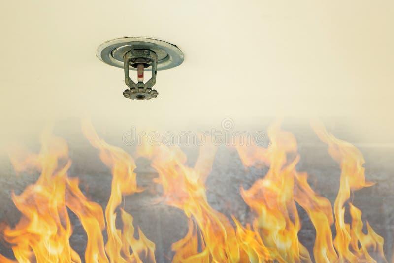 Защита от огня Увольняйте голова спринклера на белом потолке в здании, действии датчика когда дым обнаружил стоковые изображения rf