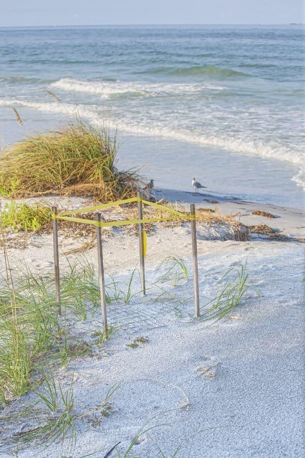 Защищенное гнездо морской черепахи стоковая фотография rf