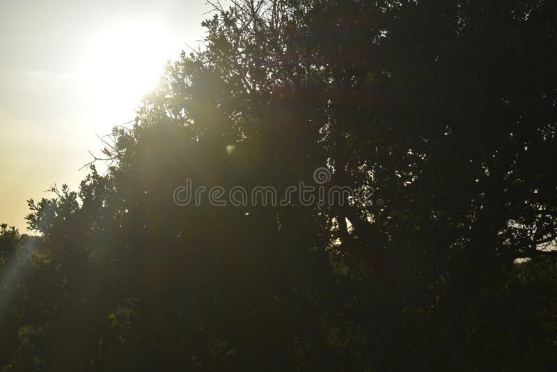 за валом захода солнца стоковое фото rf