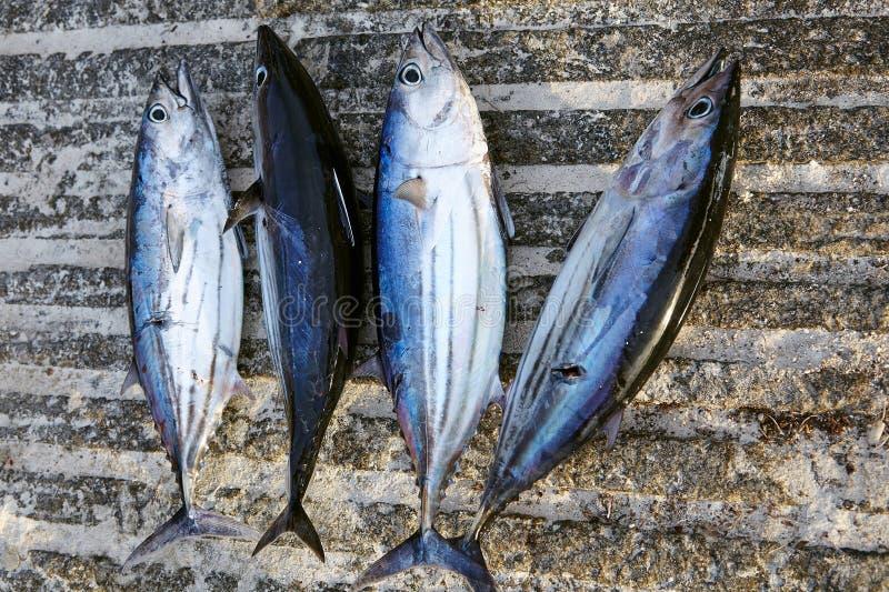 Задвижка тунца стоковые фото