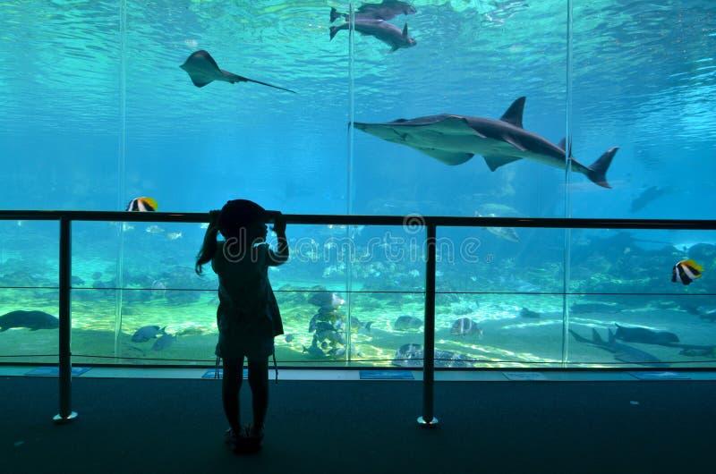Залив акулы в мире Gold Coast Квинсленде Австралии моря стоковая фотография rf