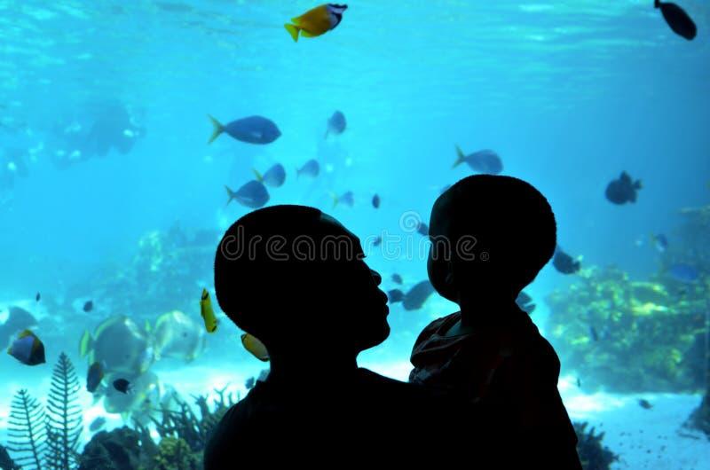 Залив акулы в мире Gold Coast Квинсленде Австралии моря стоковые изображения rf