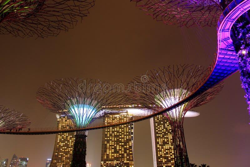Download залив садовничает Singapore Стоковое Изображение - изображение насчитывающей ноча, город: 81806681