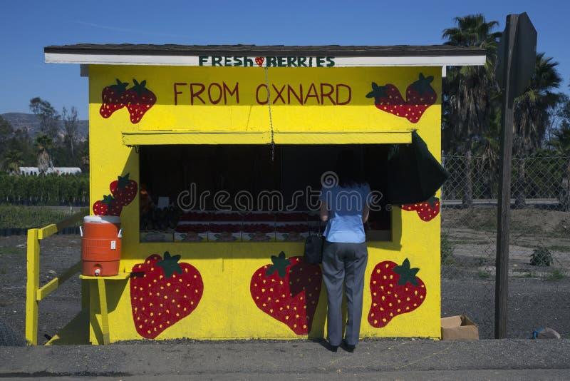Задняя часть женщины на стойке обочины желтого цвета свежих фруктов, трассе 126, Santa Paula, Калифорния, США стоковая фотография