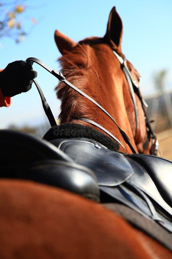Задняя часть лошади стоковые изображения rf