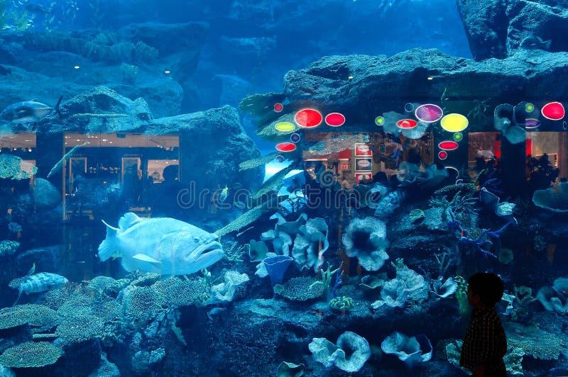 звеец Дубай аквариума подводный стоковое фото