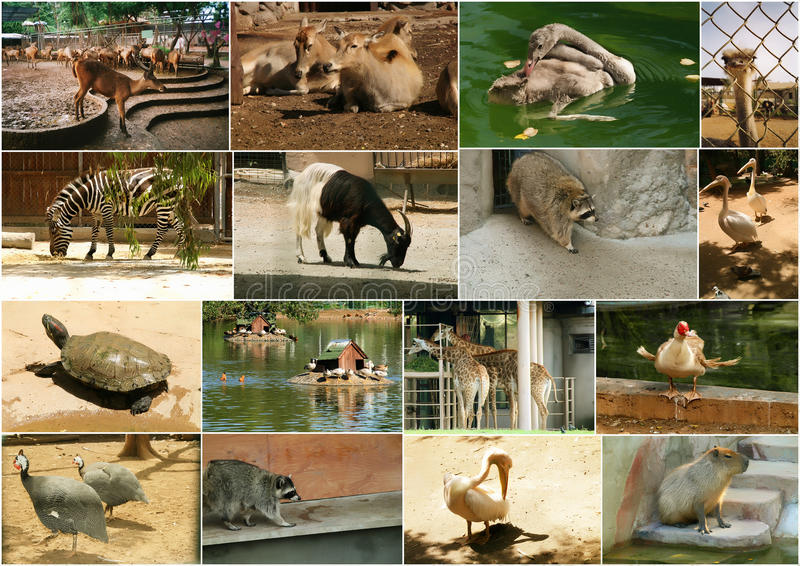 звеец животных стоковые фото