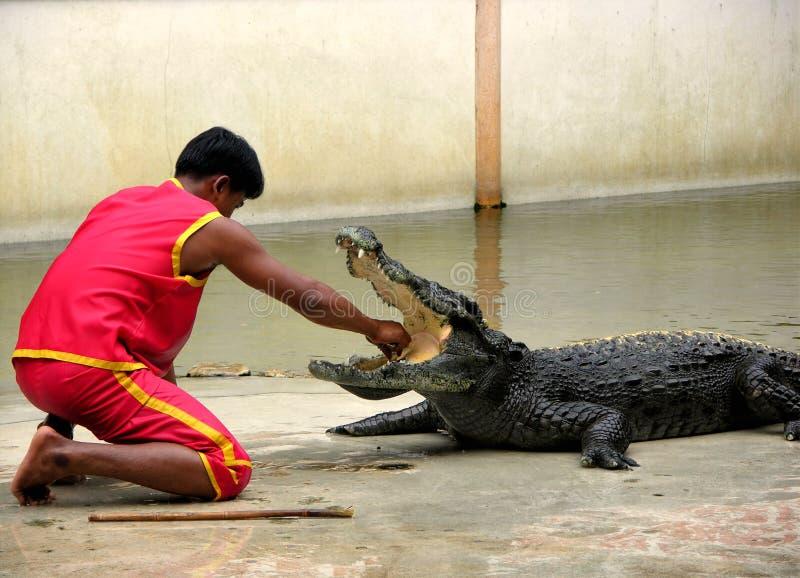 звеец фермы 6 крокодилов samutprakan стоковые изображения rf