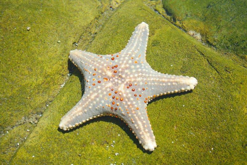 звезда моря стоковое изображение rf