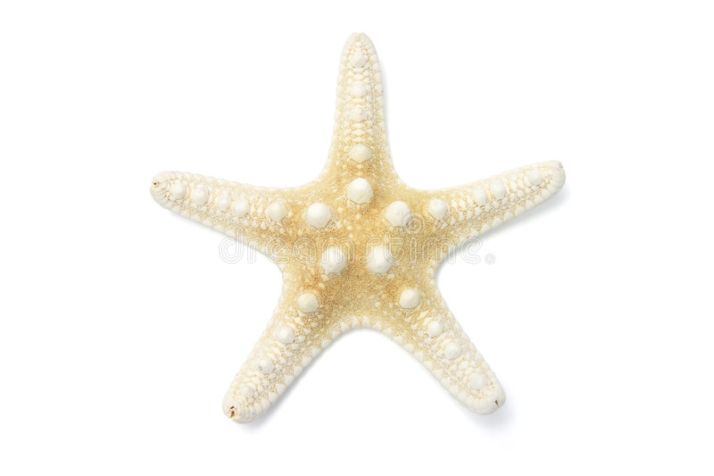 звезда рыб стоковые фотографии rf