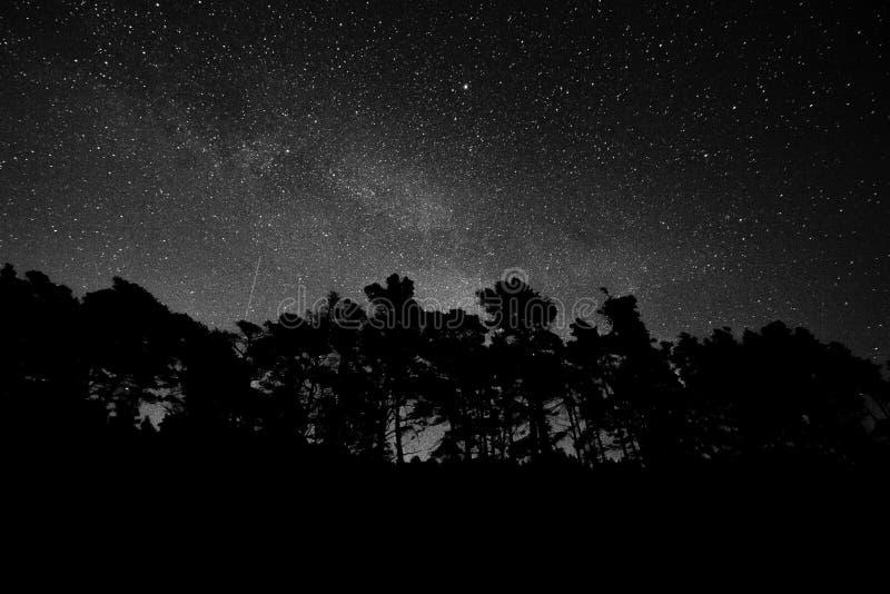 Звездная ночь с высокими деревьями стоковые фото