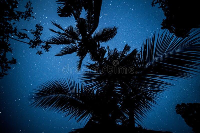 Звезды через пальмы стоковые фотографии rf