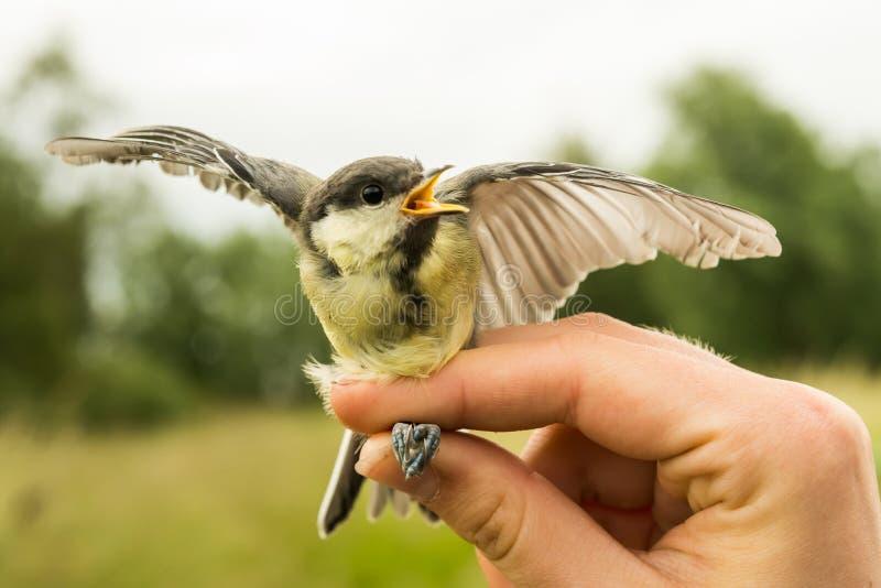 Звенеть птицы стоковое фото