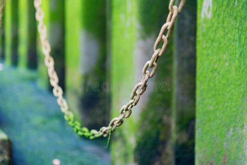 Звенья цепи предусматриванные в зеленой воде полют с селективным фокусом стоковые изображения rf