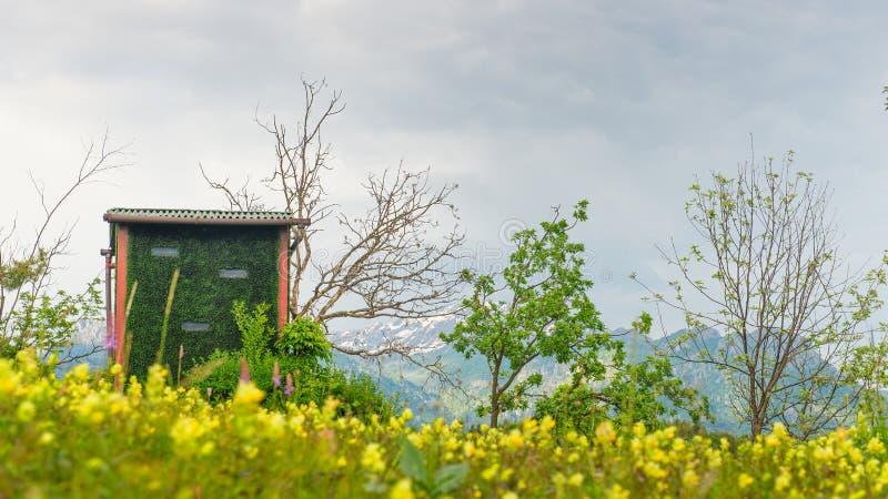 Звероловство закамуфлированное хатой в зеленом цвете стоковое фото rf