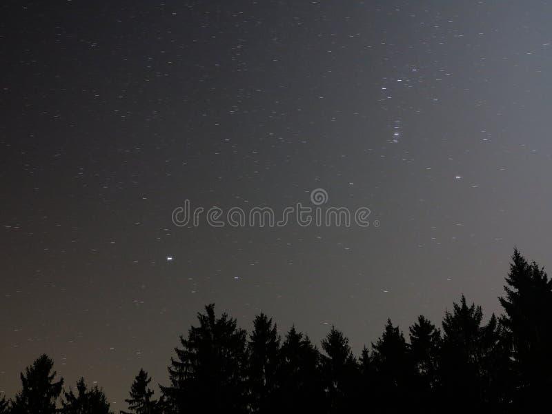 Звёздное небо над верхними частями ели стоковая фотография rf
