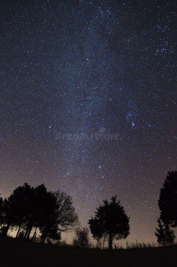 Звёздное небо над Treeline, Вирджинией, США стоковое изображение rf