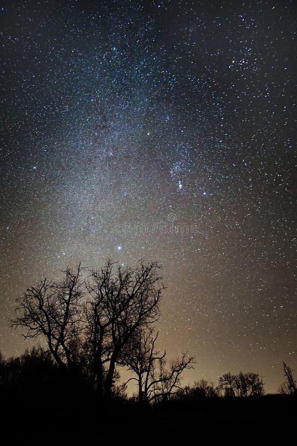 Звёздное небо над Treeline, Вирджинией, США стоковые изображения