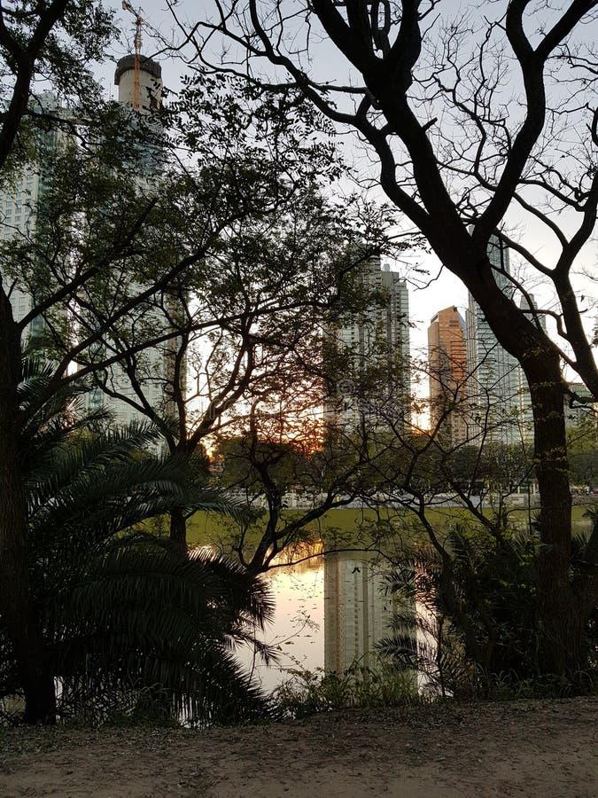 Здания и деревья стоковые фото