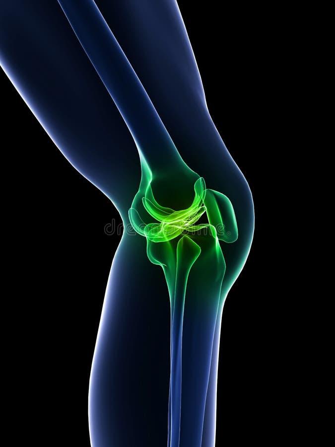 здоровое колено иллюстрация штока