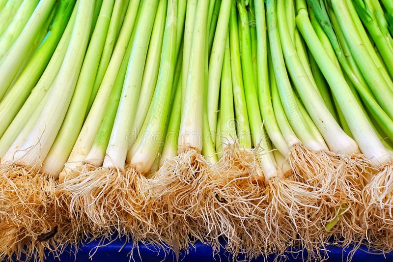 Здоровый лук-порей зеленого и свежего овоща стоковые изображения