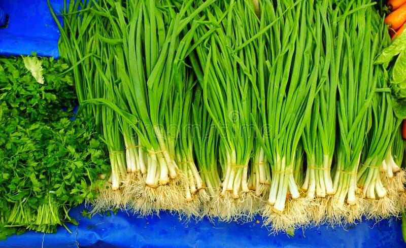 Здоровый лук-порей зеленого и свежего овоща стоковая фотография rf