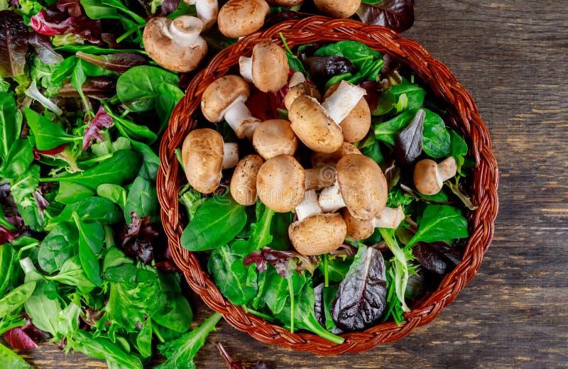 Здоровый салат с сырцовыми Champignons с салатом vegan с сырцовыми грибами стоковые фотографии rf