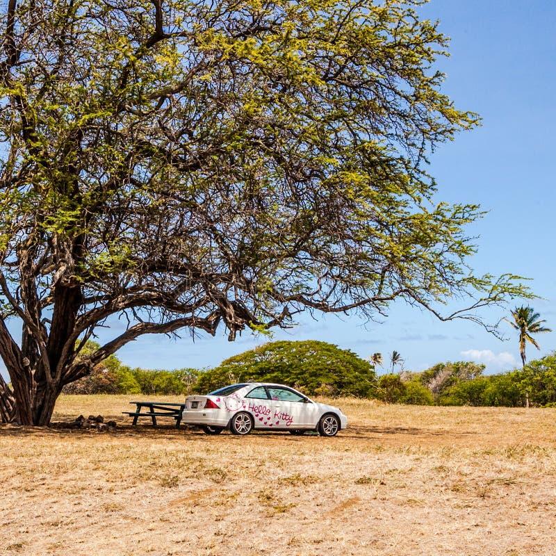 Здравствуйте автомобиль киски покрашенный под полем Гавайских островов дерева стоковое фото rf