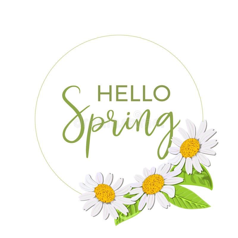 Здравствуйте! весна Красивый изолированный венок маргаритки Элегантный флористический стоцвет цветет собрание Рамка, текст иллюстрация штока