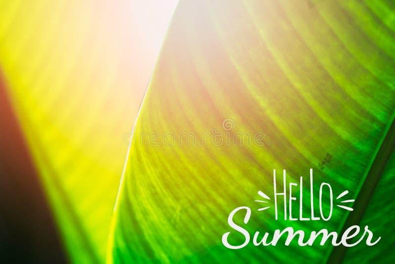 Здравствуйте концепция предпосылки лета Листья зеленой природы тропические, закрывают вверх по выборочному фокусу листьев helicon иллюстрация штока