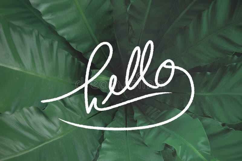 Здравствуйте! на зеленой предпосылке листьев стоковые фотографии rf