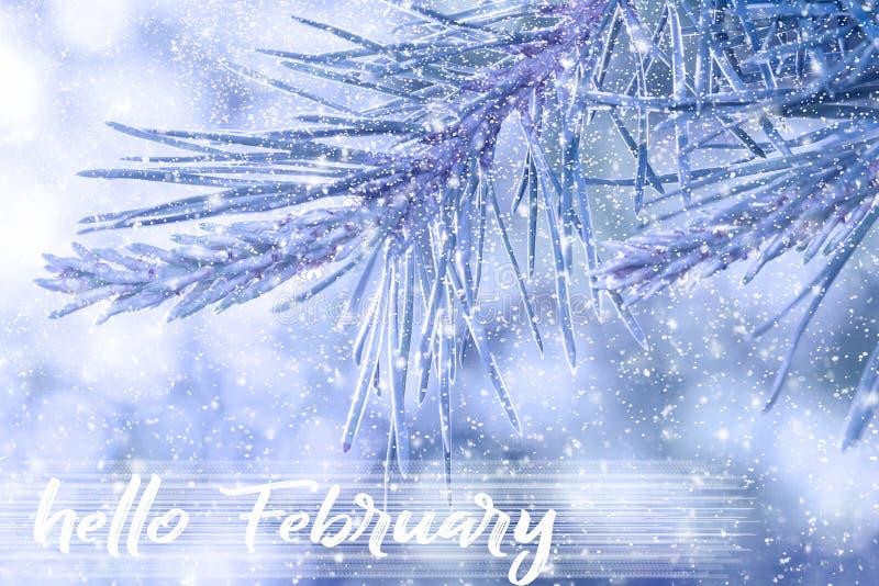 Здравствуйте! поздравительная открытка в феврале Концепция зимних отдыхов Ветви ели в снежке стоковое фото rf