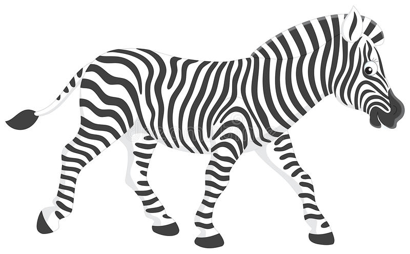 зебра иллюстрация штока