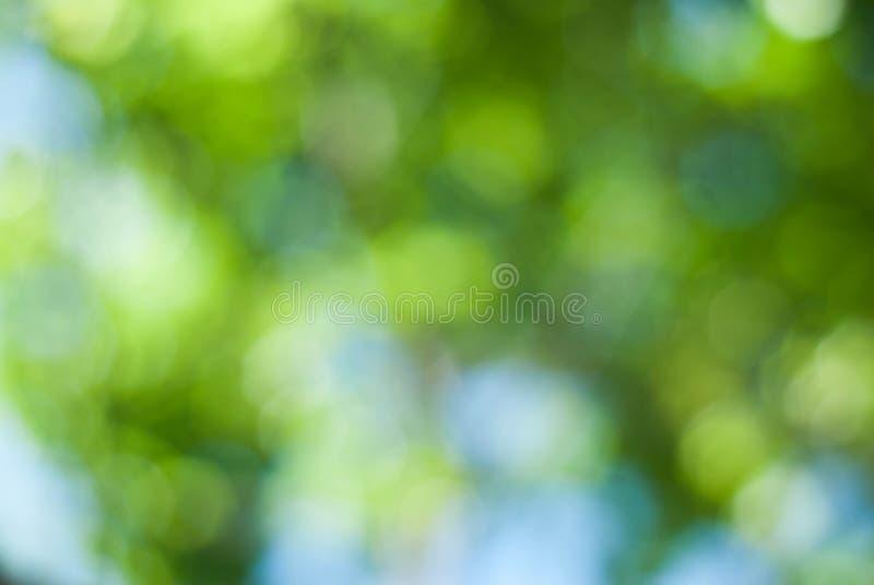 Зеленая абстрактная Defocused естественная предпосылка из парка лета Bokeh завтрак-обеда неба TreesBlue зеленого цвета фокуса стоковые фотографии rf