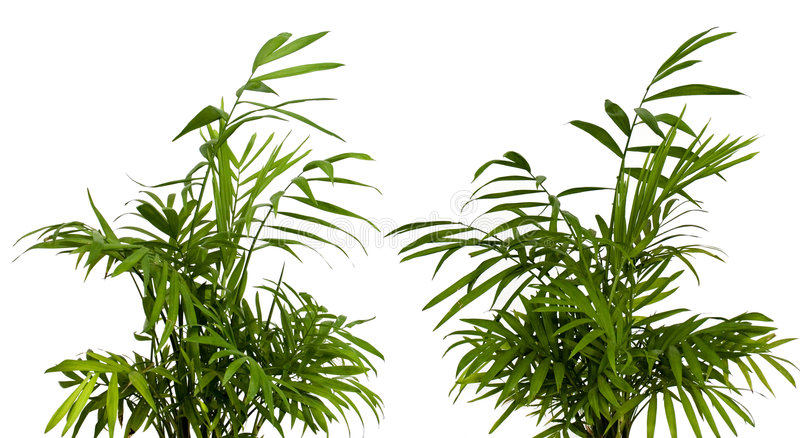 зеленая белизна shrub стоковое фото