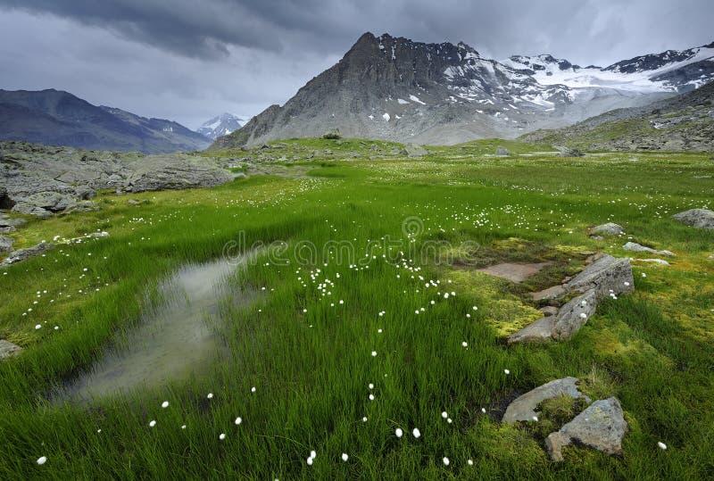 зеленая вегетация горы стоковые фото