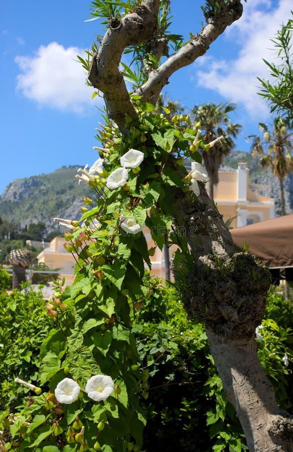Зеленая великолепие-Я-Италия стоковое изображение rf