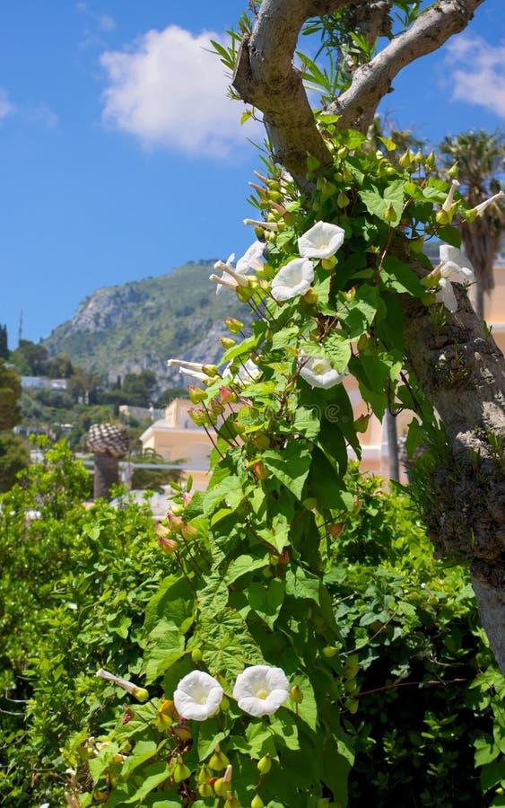 Зеленая великолепие-II-Италия стоковое фото rf