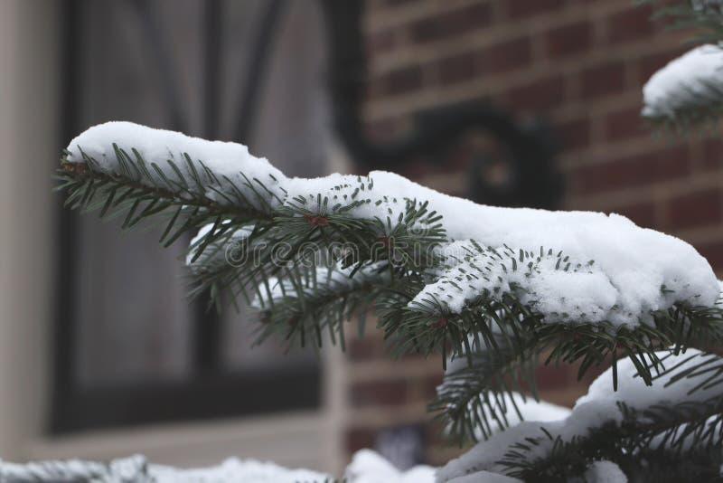 Зеленая ветвь хвои со снегом на ем стоковое фото