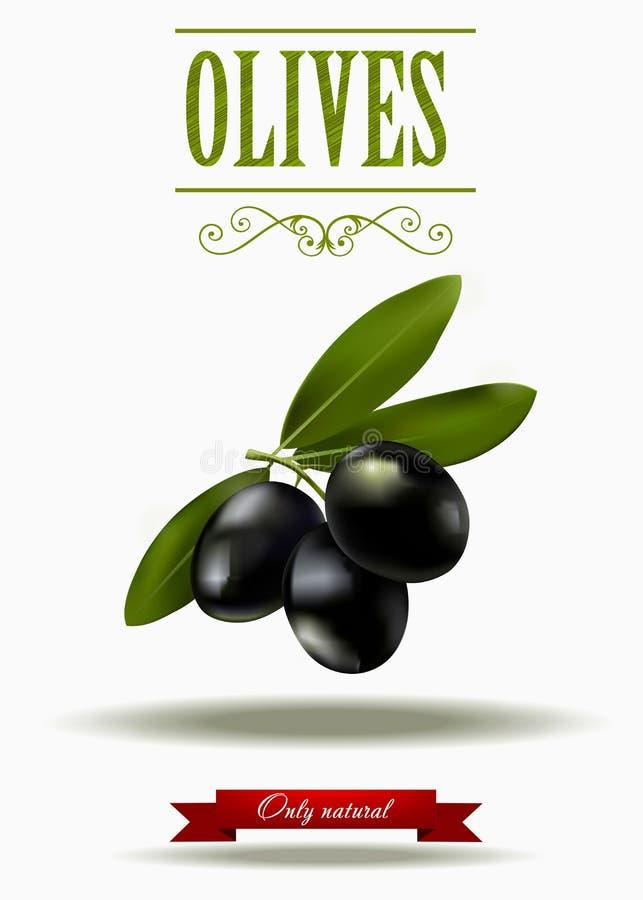 Зеленая ветвь черных оливок, реалистических оливок, иллюстрации вектора, ярлыка зеленой оливки иллюстрация вектора