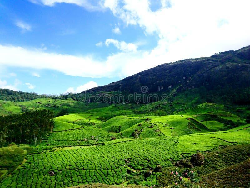 Зеленая гора стоковое фото
