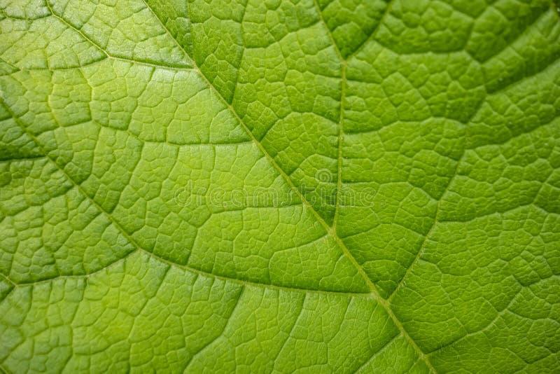 Зеленая деталь лист стоковое фото