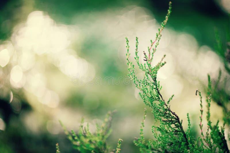 Зеленая естественная предпосылка, из фокуса Bokeh леса Ретро тонизированное знамя скопируйте космос текстура запачканная конспект стоковые фотографии rf