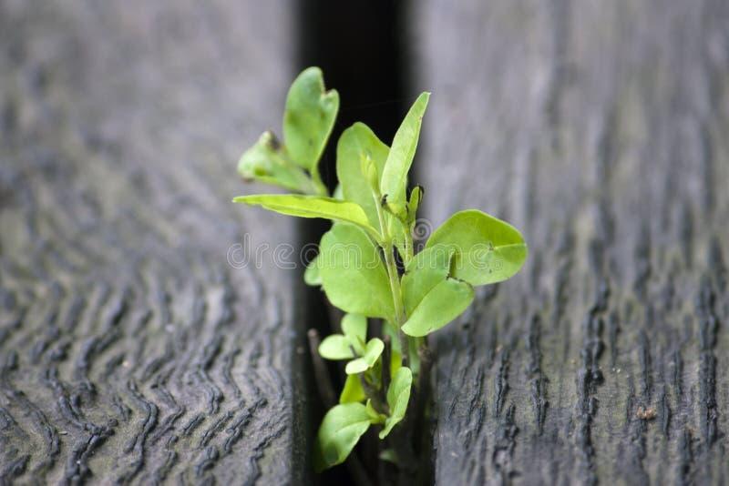 Зеленая жизнь, зеленые саженцы стоковая фотография rf