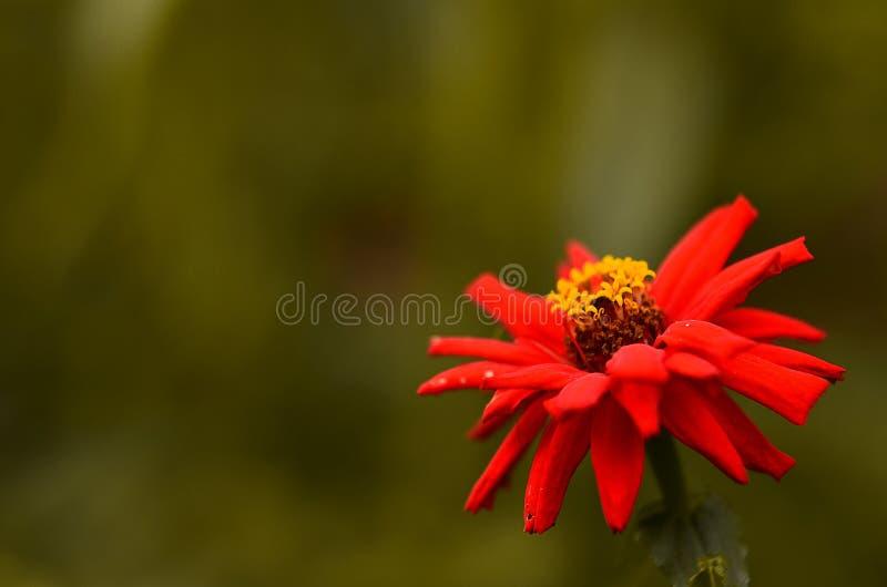 Зеленая жизнь с цветком Zinnia стоковая фотография