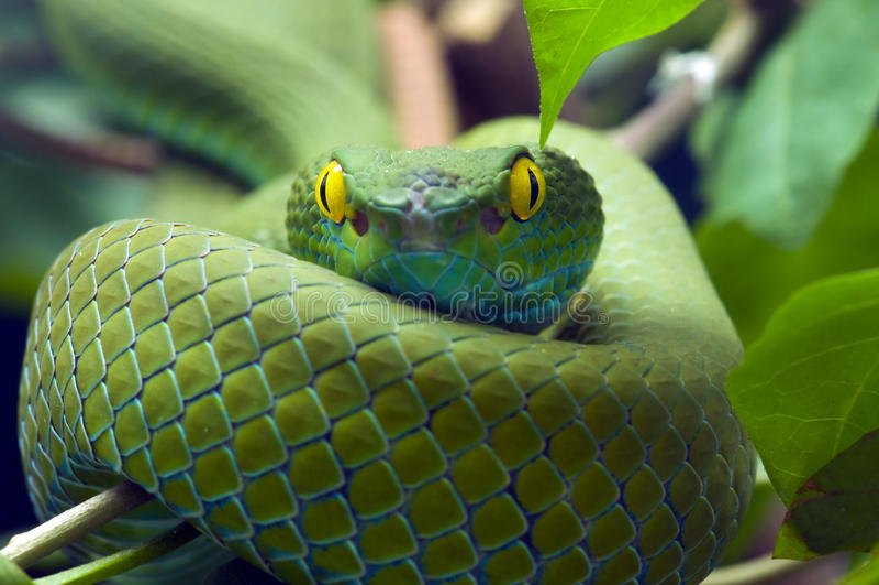 зеленая змейка стоковое изображение