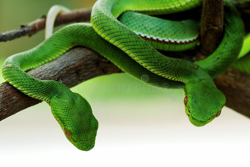 зеленая змейка стоковые изображения