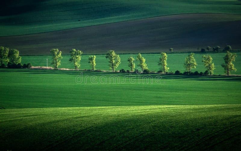 Зеленая и серая предпосылка конспекта поля весны стоковые изображения