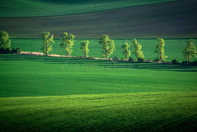 Зеленая и серая предпосылка конспекта поля весны стоковое изображение rf