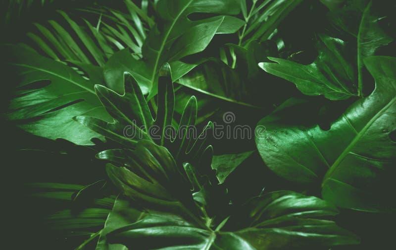 Зеленая концепция предпосылки Тропические листья ладони, лист джунглей стоковые изображения